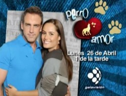 """""""Perro Amor"""" se estrena por Galavisión"""